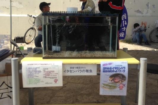 【ご報告】外来魚駆除釣り大会を開催しました!_a0263106_16333968.jpg