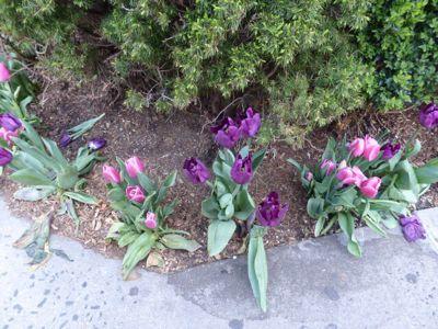 14年4月 NY  6★翌日の下見を兼ねて、いざ!街へ_d0285416_2141274.jpg