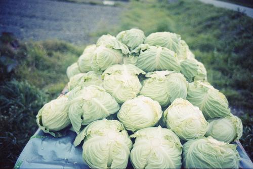 自然農を訪ねて 京都から滋賀へ_b0212922_10541171.jpg