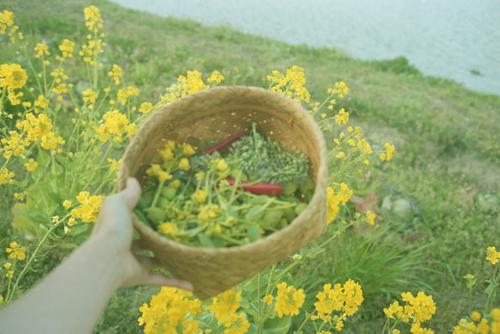 自然農を訪ねて 京都から滋賀へ_b0212922_1054278.jpg