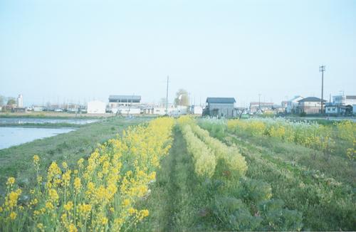 自然農を訪ねて 京都から滋賀へ_b0212922_10553516.jpg