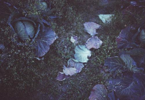 自然農を訪ねて 京都から滋賀へ_b0212922_10573412.jpg