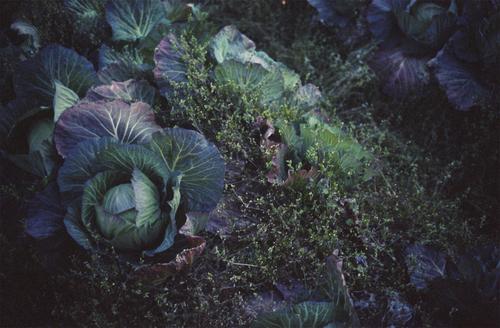 自然農を訪ねて 京都から滋賀へ_b0212922_1181382.jpg