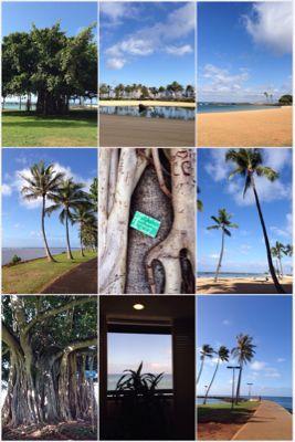 我がハワイ歴_f0215324_5511792.jpg