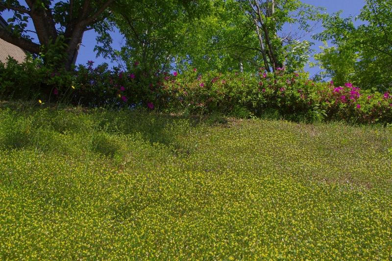 春の信楽ウォーキング_c0113733_232521100.jpg
