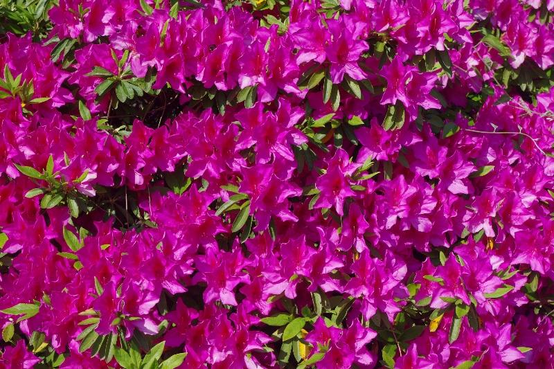 春の信楽ウォーキング_c0113733_2328291.jpg
