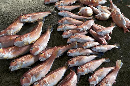 アマダイ釣りの漁師_d0159062_14571531.jpg