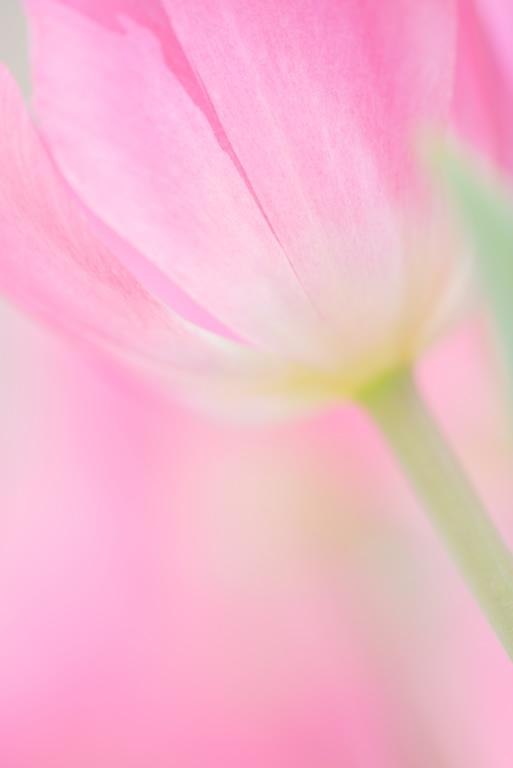 チューリップ 4_e0293862_17294538.jpg