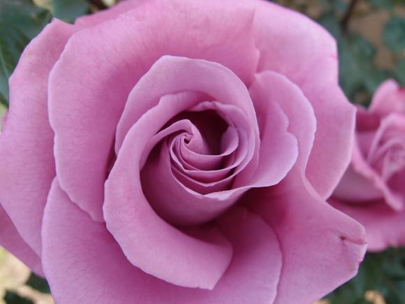 五月の薔薇_f0158364_09122005.jpg
