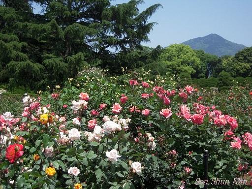 植物園 (なんじゃもんじゃ) 2014年5月12日_a0164068_21595279.jpg