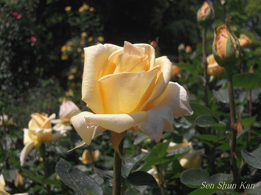 植物園 (なんじゃもんじゃ) 2014年5月12日_a0164068_2204026.jpg