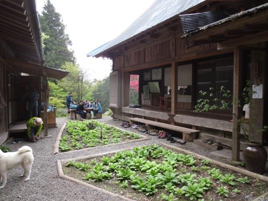 山中の蕎麦屋とヤマツツジ_c0310571_09170057.jpg