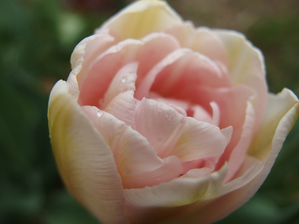 馬酔木(アセビ)の花など_f0138096_23451450.jpg