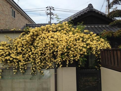 春の植栽_b0078597_2037168.jpg