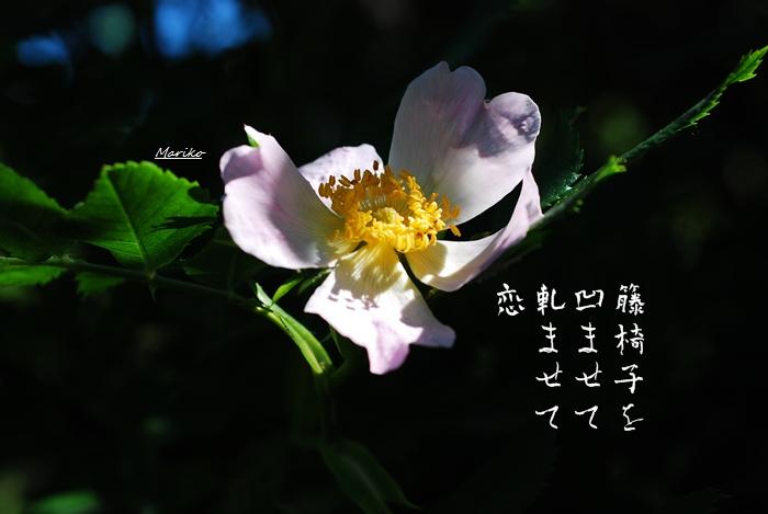 f0053297_1442341.jpg