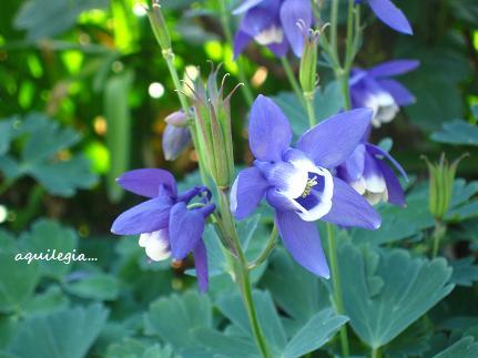 聖なる花☆_c0098807_21554166.jpg