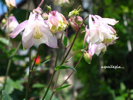 聖なる花☆_c0098807_22322726.jpg