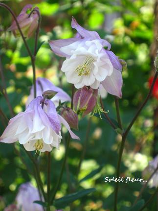 聖なる花☆_c0098807_2244478.jpg