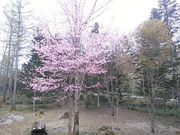 皆空窯 泉の かまぐれ便り_b0185013_14154774.jpg