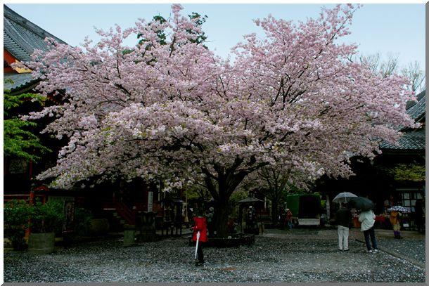 春のつくば路(茨城)_d0123528_15595590.jpg