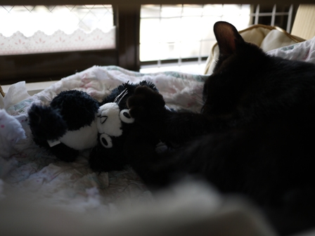 ぴっちくん猫 ぎゃぉす編。_a0143140_23312722.jpg