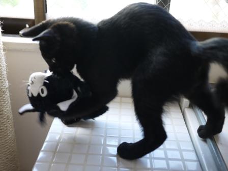 ぴっちくん猫 ぎゃぉす編。_a0143140_23315961.jpg