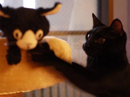 ぴっちくん猫 ぎゃぉす編。_a0143140_23331456.jpg