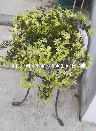 d0232840_1517368.jpg