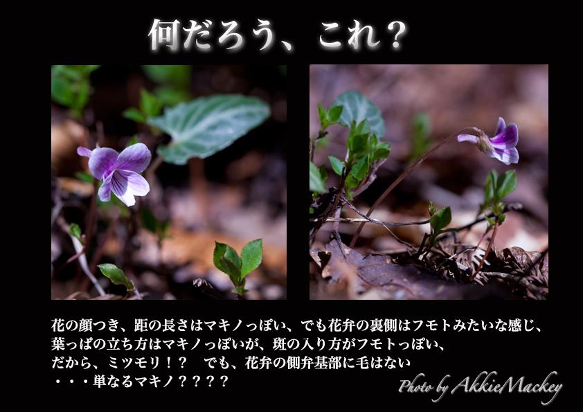 b0167256_6485048.jpg