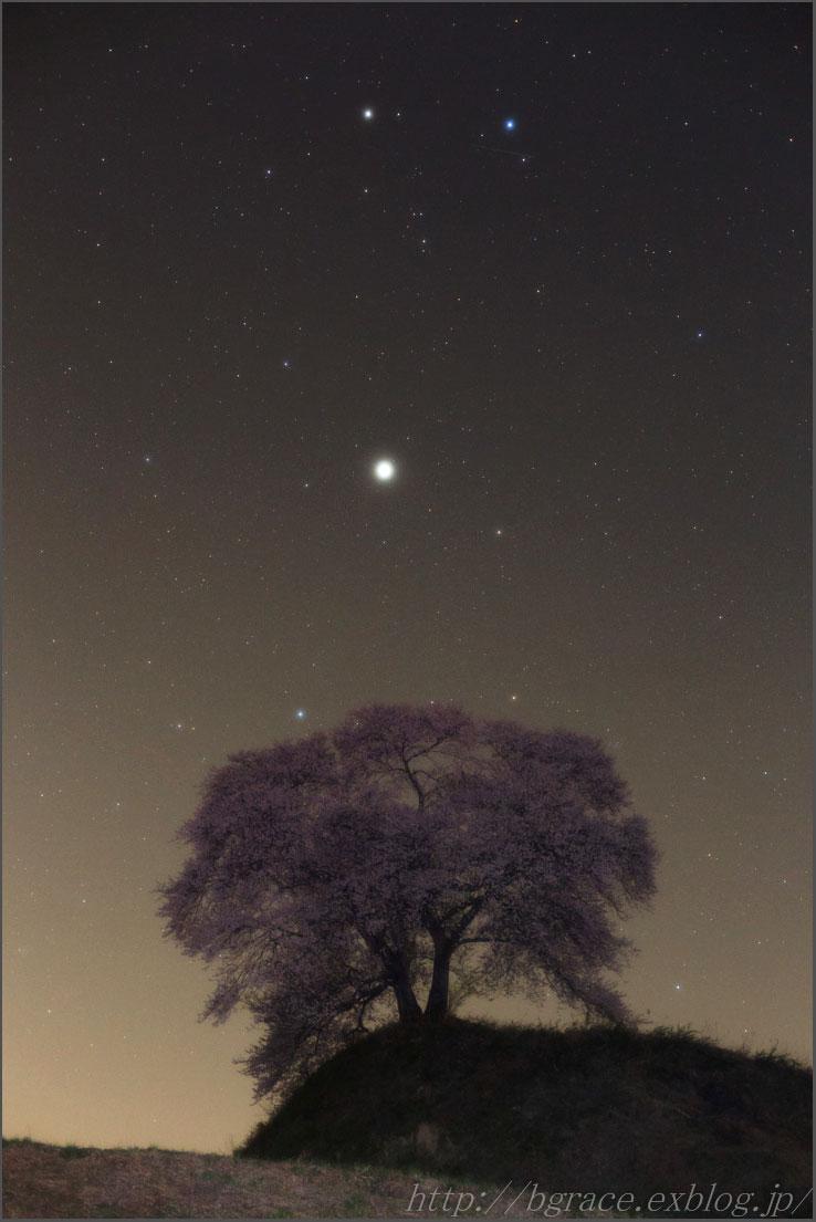 一本桜とふたご座_b0191074_13574869.jpg