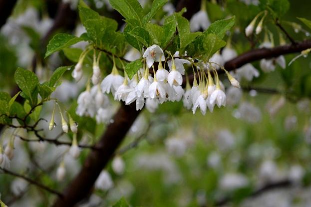 今年は沢山の花が咲き_c0119197_1013682.jpg
