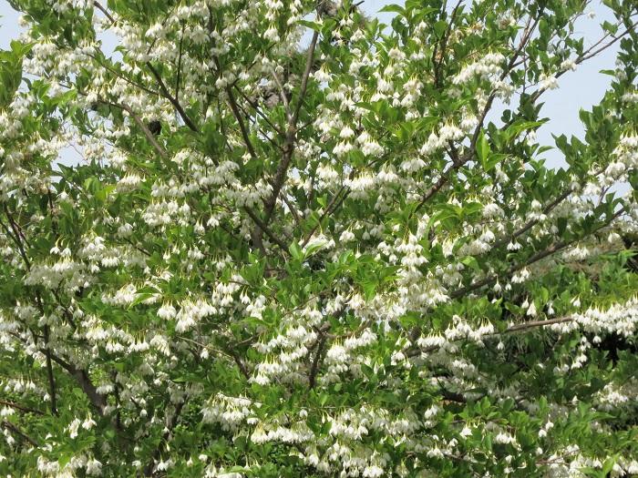 今年は沢山の花が咲き_c0119197_1021858.jpg