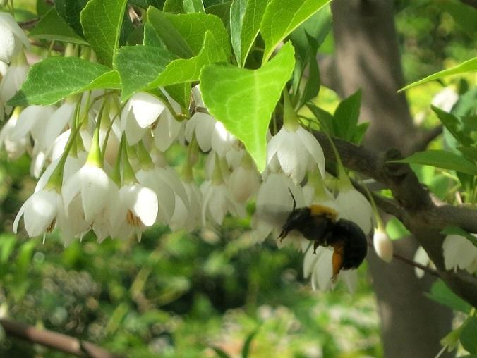 今年は沢山の花が咲き_c0119197_1022882.jpg