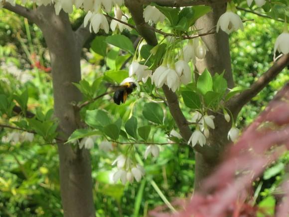 今年は沢山の花が咲き_c0119197_103065.jpg
