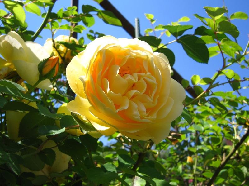 初夏の庭の賑わい!!_a0208899_13263467.jpg