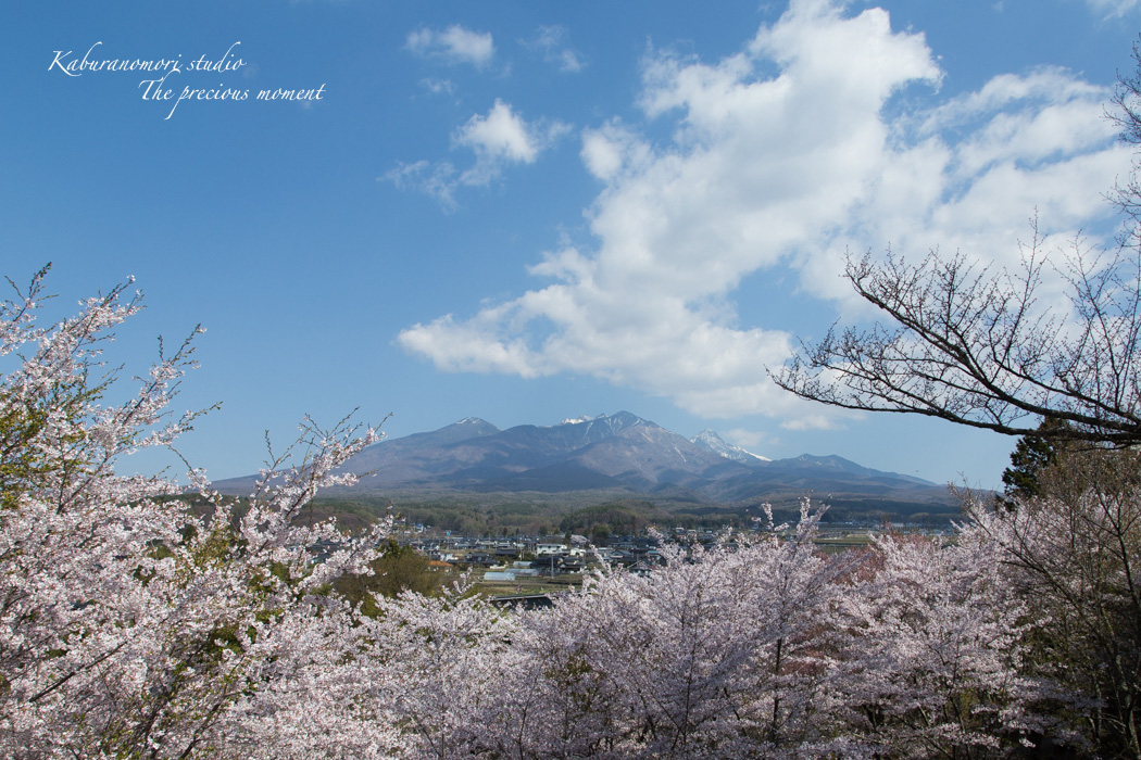 春の谷戸城跡から_c0137403_15145445.jpg