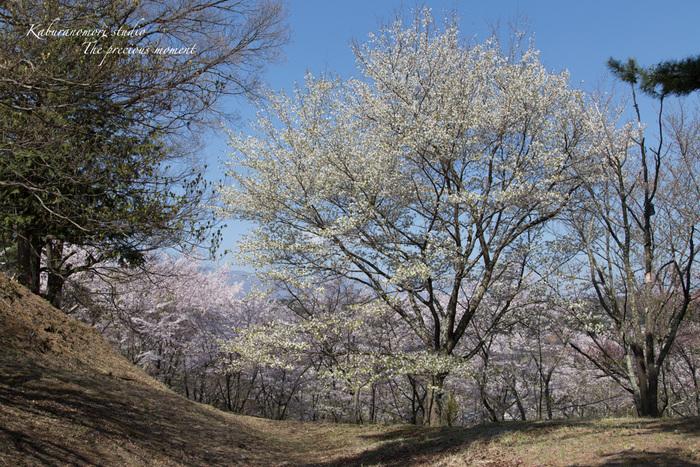 春の谷戸城跡から_c0137403_15152721.jpg