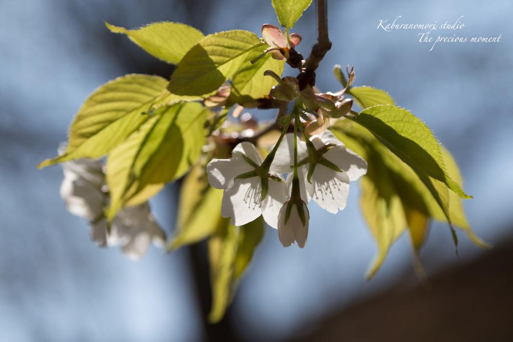 春の谷戸城跡から_c0137403_15155710.jpg
