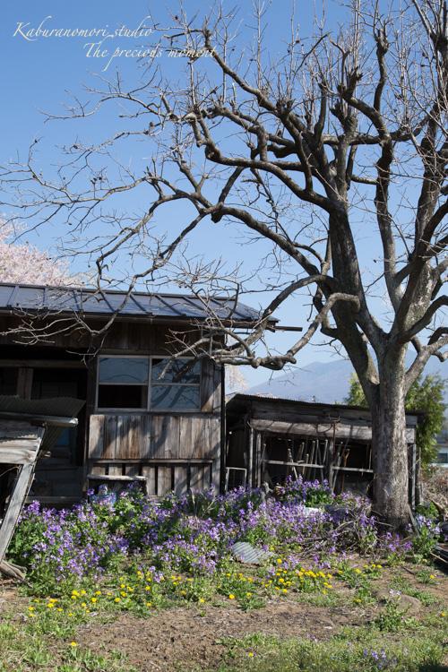 春の谷戸城跡から_c0137403_15161483.jpg