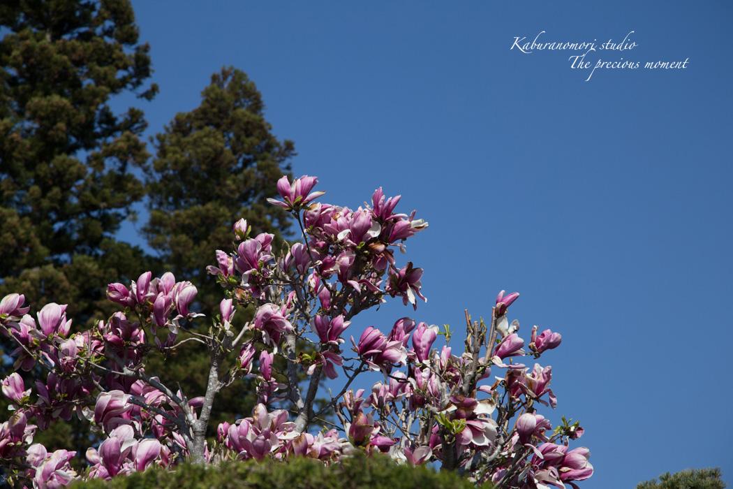 春の谷戸城跡から_c0137403_15161848.jpg