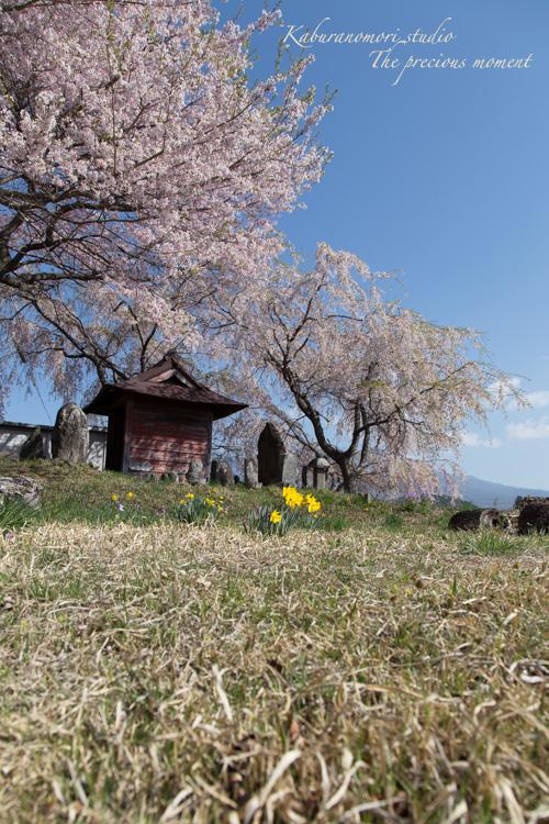 春の谷戸城跡から_c0137403_1516225.jpg