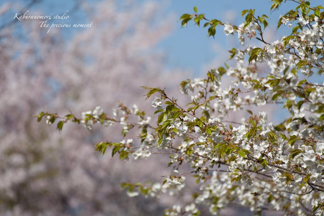 春の谷戸城跡から_c0137403_15164875.jpg