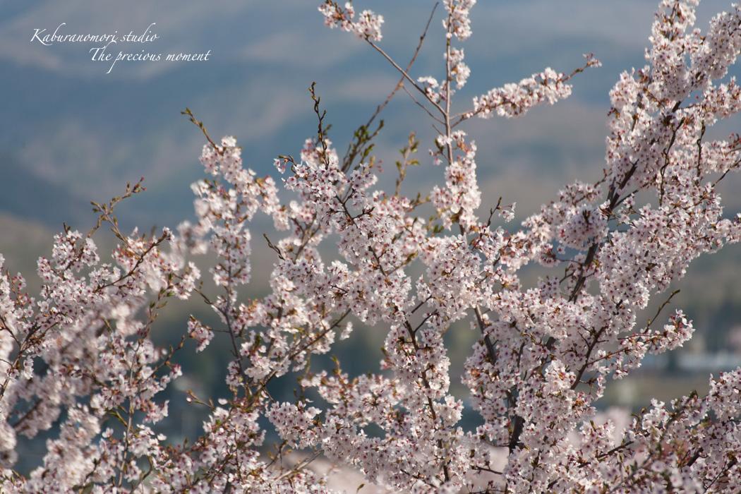 春の谷戸城跡から_c0137403_15201612.jpg