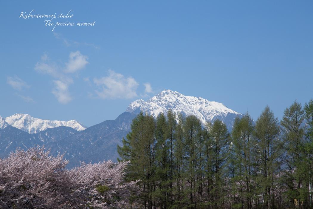春の蕪フィールド_c0137403_1524177.jpg