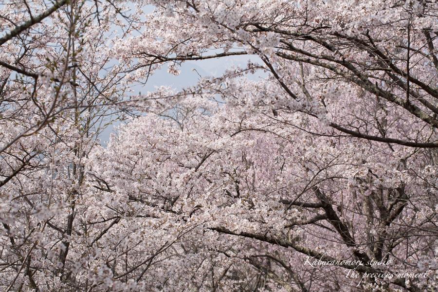 春の谷戸城跡から_c0137403_15282777.jpg