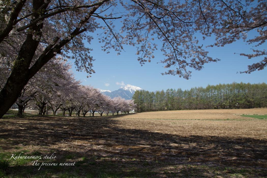 春の蕪フィールド_c0137403_1532647.jpg
