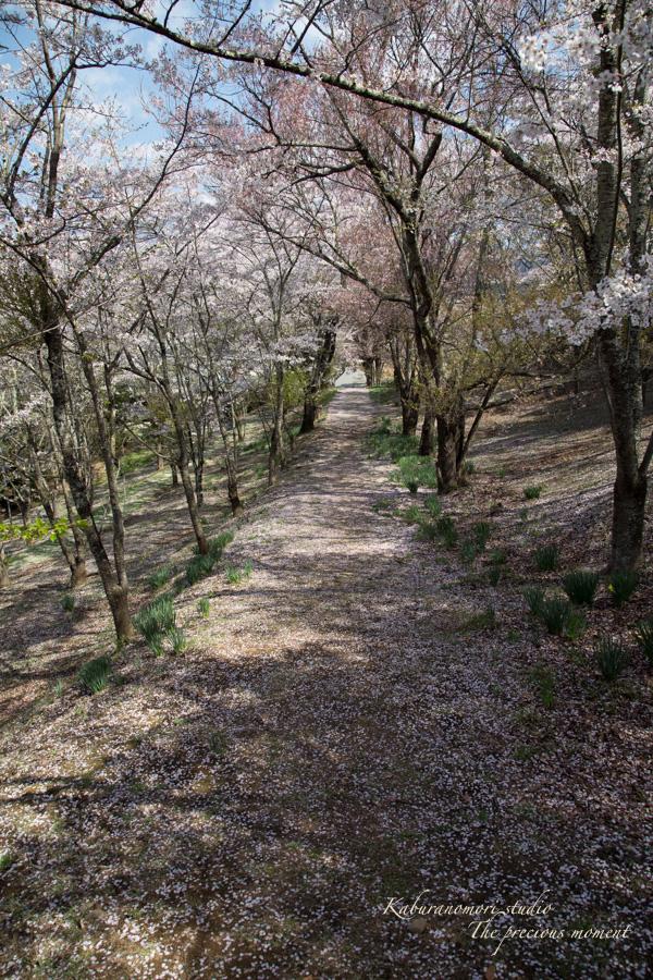 春の谷戸城跡から_c0137403_15334926.jpg