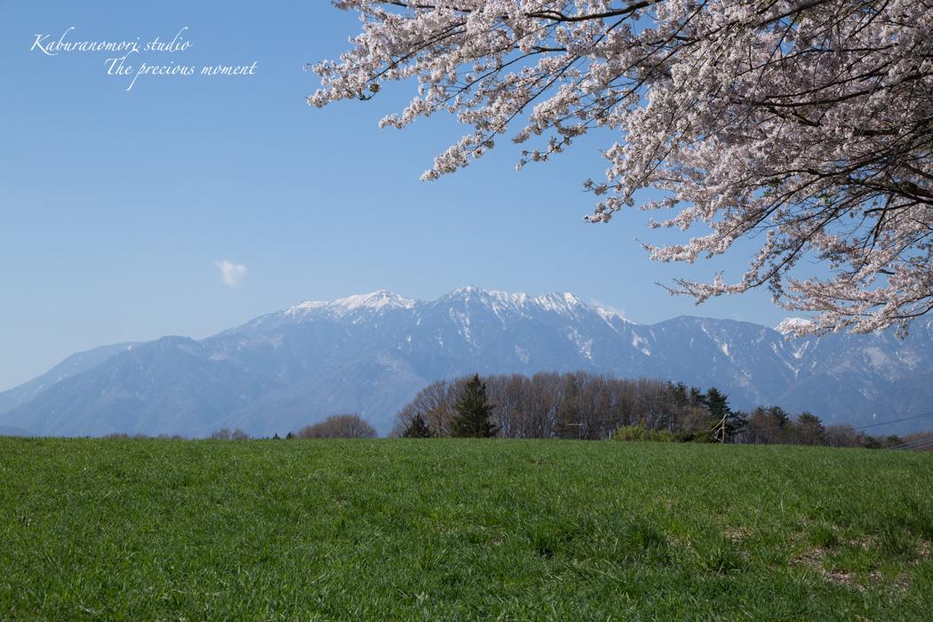 春の蕪フィールド_c0137403_1544031.jpg