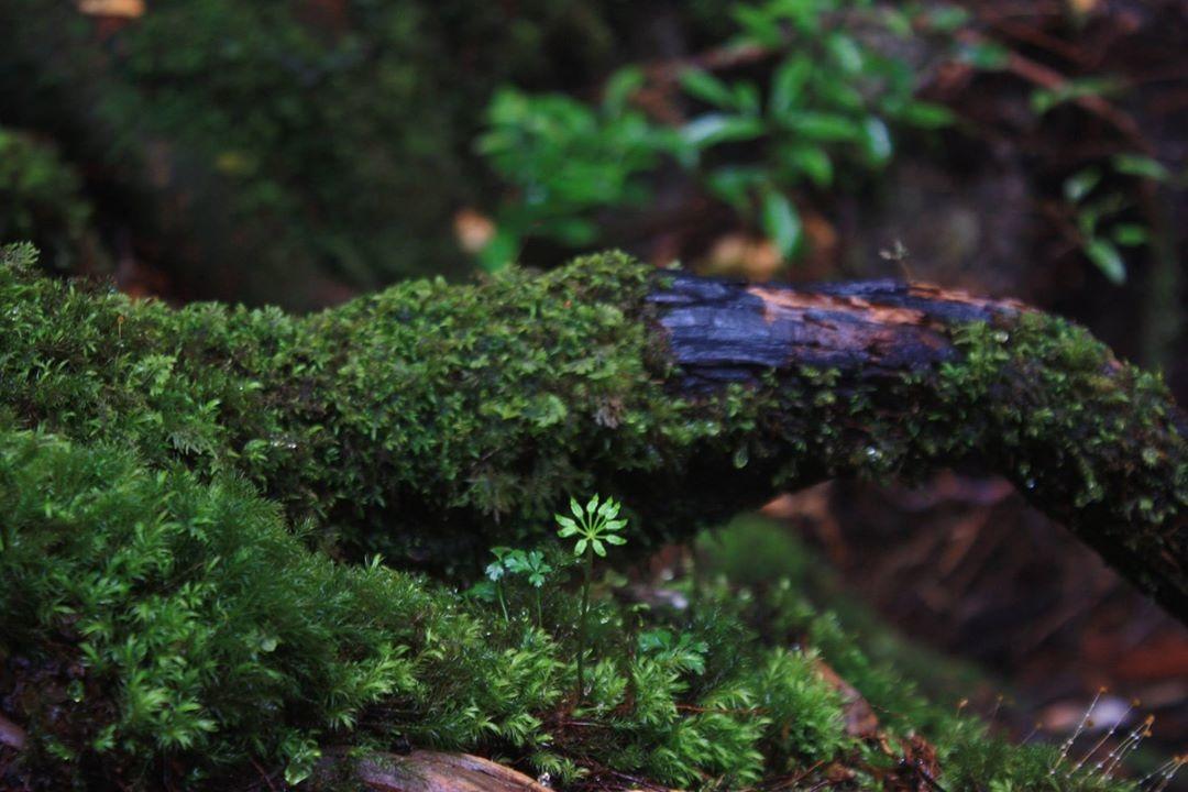 みのださんの写真紹介です。〜森へ行こう〜_a0213316_14181930.jpg