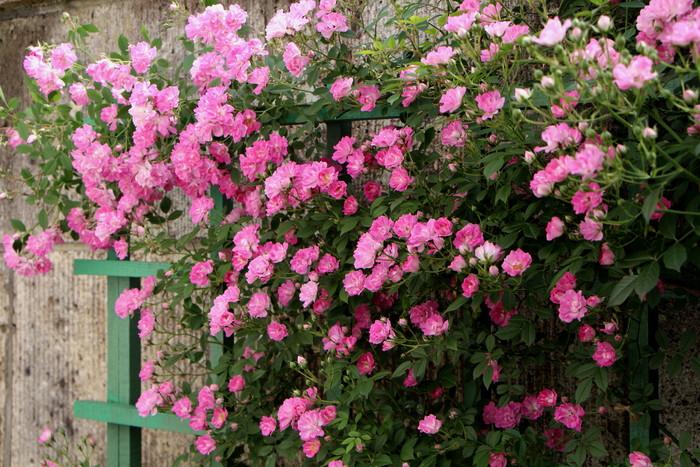 バラの季節_d0150720_168372.jpg